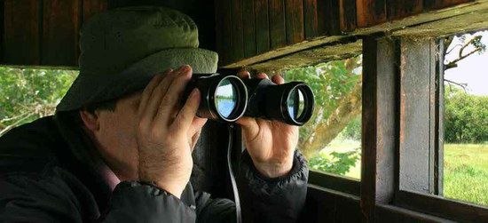 Bird Watcher In Wooden Shed