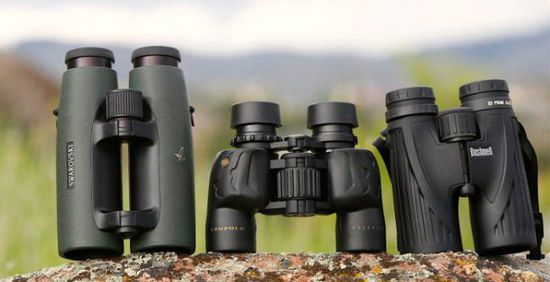 Line Up Of Birding Binoculars