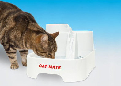 Water Fountain For Your Cat In All White