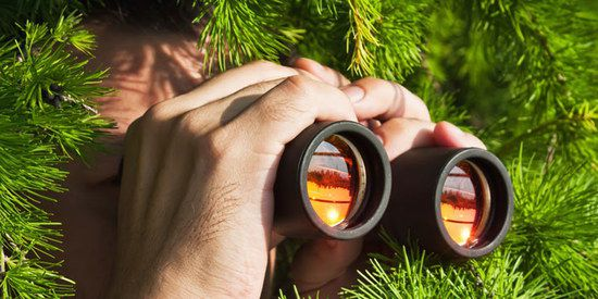 Man In Bushes With Binoculars
